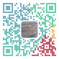 Alipay 个性二维码